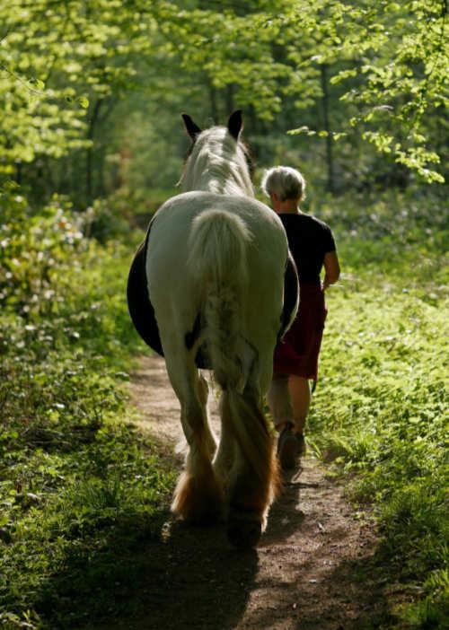 Wandern mit Pferd und Therapiegespräche führen